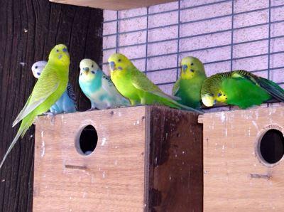 birds_of_Australia_-_5
