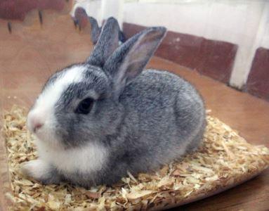 rabbits_as_pets_-_2