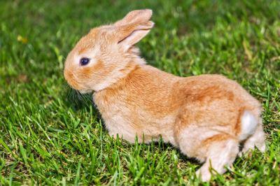 rabbits_as_pets_-_4