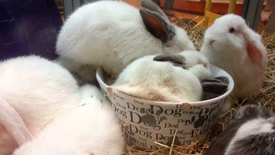 rabbits_as_pets_-_6