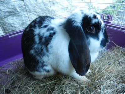 set_up_a_comfy_rabbit_home_-_3