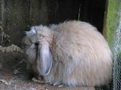 set_up_a_comfy_rabbit_home_-_4