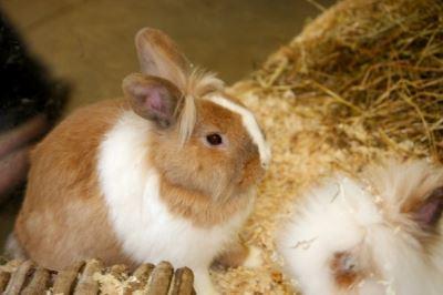 set_up_a_comfy_rabbit_home_-_5