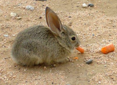 set_up_a_comfy_rabbit_home_-_6