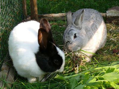 set_up_a_comfy_rabbit_home_-_7