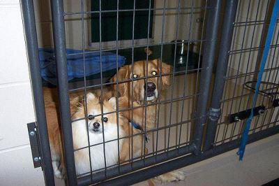 dog_boarding_kennel_-_2