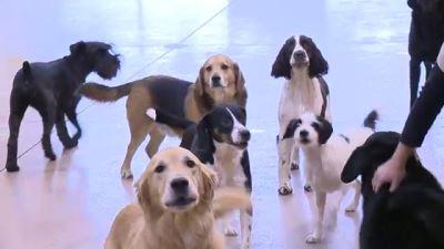 dog_boarding_kennel_-_4
