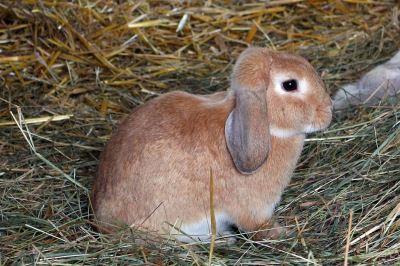pet_rabbit_feed_-_2