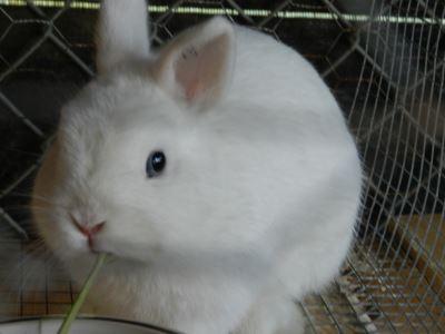 pet_rabbit_feed_-_3