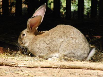 pet_rabbit_feed_-_4