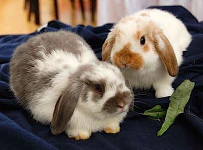 pet_rabbit_feed_-_5