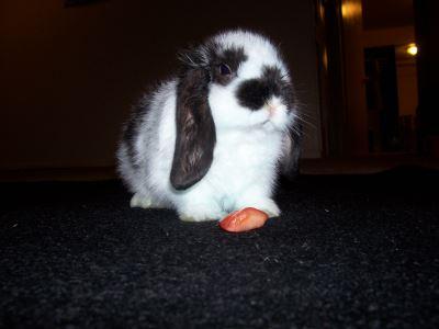 pet_rabbit_feed_-_6