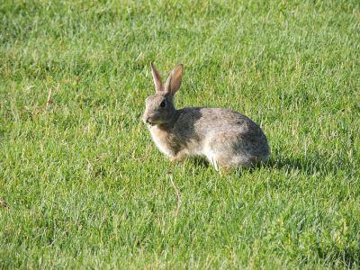 rabbit_games_-_2