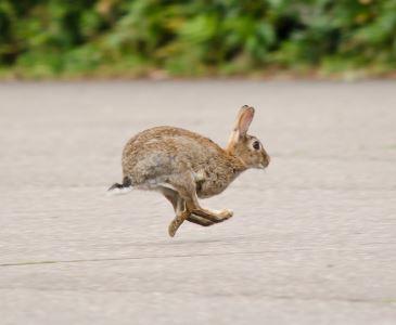 rabbit_games_-_3