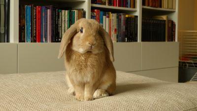 rabbit_games_-_4