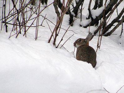 rabbit_games_-_6