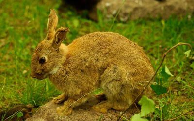 rabbit_games_-_7