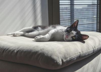happy_indoor_cat_-_2
