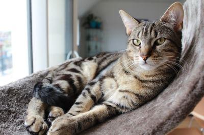 happy_indoor_cat_-_4