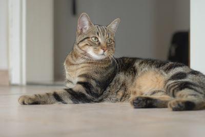 happy_indoor_cat_-_5