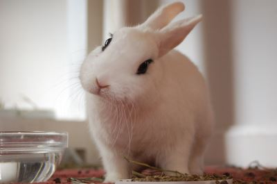 is_a_rabbit_ideal_for_me_-_5