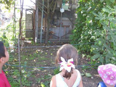 raising_backyard_chickens_with_kids_-_6