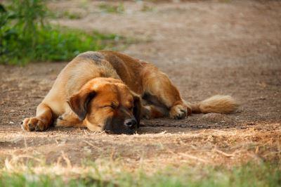 do_dogs_dream_-_2