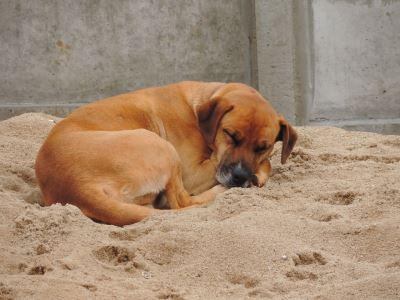 do_dogs_dream_-_3