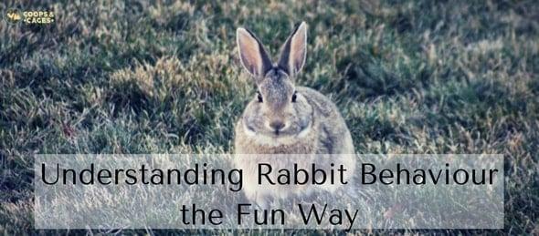 Understanding Rabbit Behaviour the Fun Way