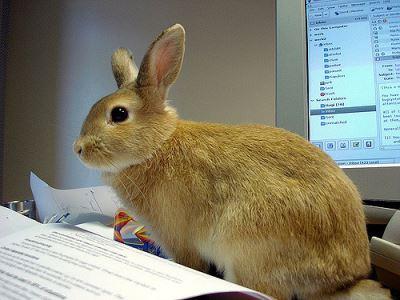 Understanding_Rabbit_Behaviour_the_Fun_Way_