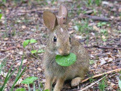 Understanding_Rabbit_Behaviour_the_Fun_Way_-_4