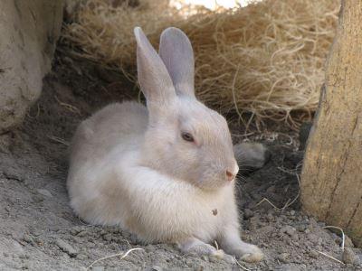 Understanding_Rabbit_Behaviour_the_Fun_Way_-_5