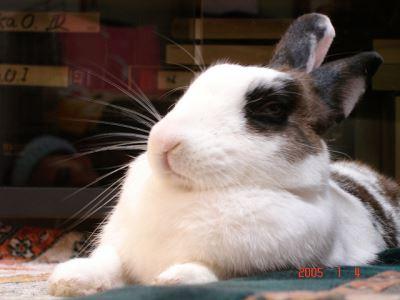 Understanding_Rabbit_Behaviour_the_Fun_Way_-_6