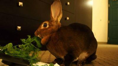 Understanding_Rabbit_Behaviour_the_Fun_Way_-_7