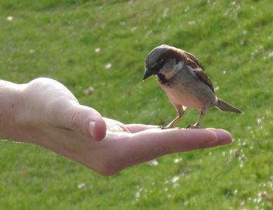 hand_feeding_your_pet_birds_-_2