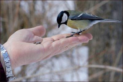 hand_feeding_your_pet_birds_-_4