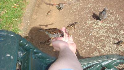 hand_feeding_your_pet_birds_-_5