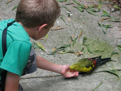 hand_feeding_your_pet_birds_-_6