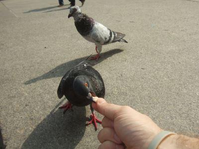 hand_feeding_your_pet_birds_-_7