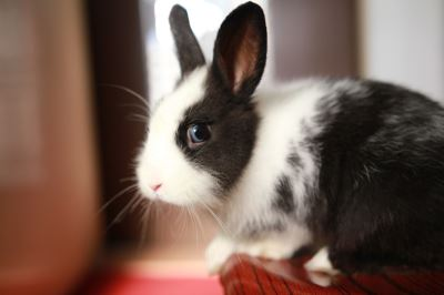 Common_Mistakes_Pet_Rabbit_Owners_Make_