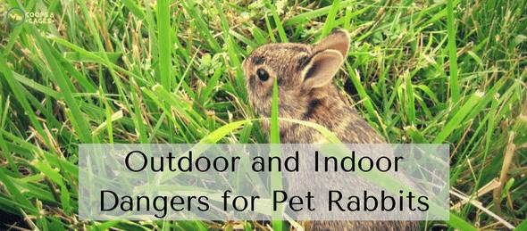 pet rabbit, rabbits