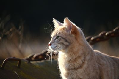 10_summer_care_tips_for_your_pet_cats_-_2