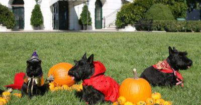 pet safety, Halloween