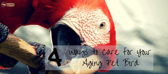 aging birds, pet birds