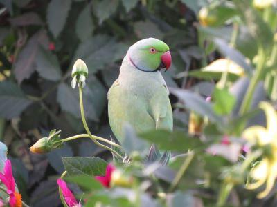 pet birds, bird diseases