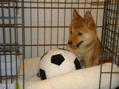 dog kennel, dog kennel training