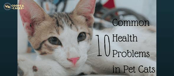 health problems in pet cats, pet cats