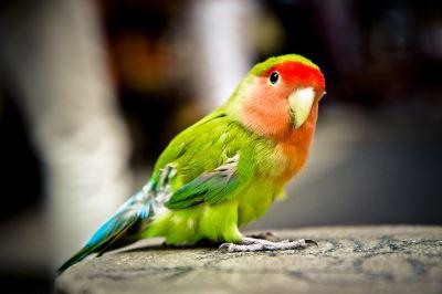 bird care, pet birds
