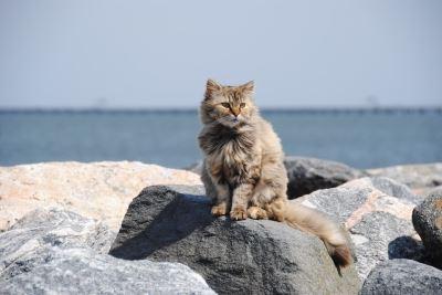 cats, pets, pet holidays