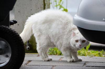 shy cat, socialize a shy cat